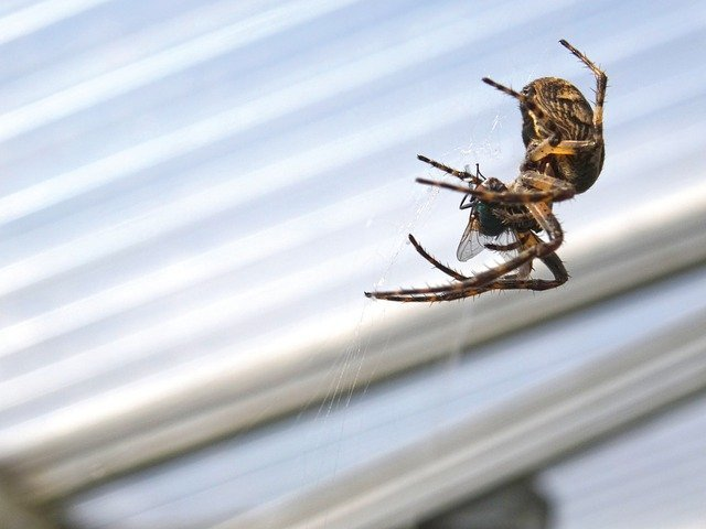 Spiders: How Do I Get Rid of Them for Good?